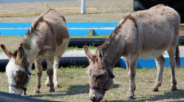 donkeys 01